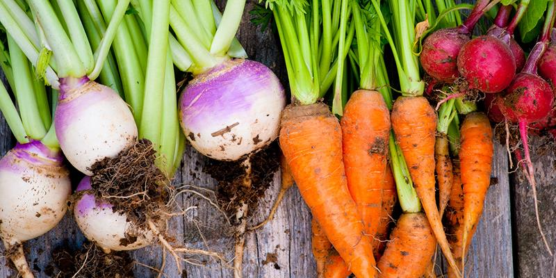 Oppskrifter med Grønnsaker